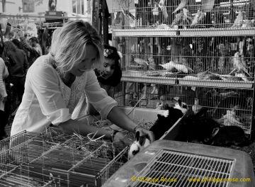Vogelmarkt  2014 18-05-2014 0
