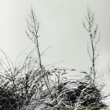 Buitenland 25-01-2015 028