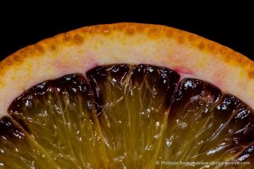Appelsien 3.jpg
